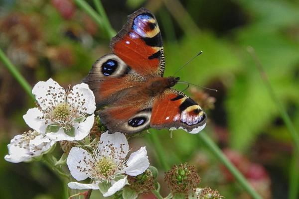 1. 蝴蝶與花.jpg
