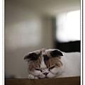 nEO_IMG__MG_9628.jpg