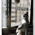 nEO_IMG__MG_2629.jpg
