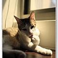 nEO_IMG__MG_3141.jpg