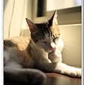 nEO_IMG__MG_3143.jpg