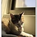 nEO_IMG__MG_3146.jpg