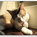 nEO_IMG__MG_3151.jpg
