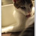 nEO_IMG__MG_3173.jpg