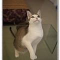 nEO_IMG__MG_3484.jpg