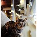 20110924貓守城堡_06.JPG
