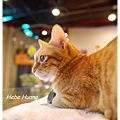 20110924貓守城堡_37.JPG