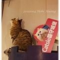 20111004緊張美花男-咪咪先生-79.jpg