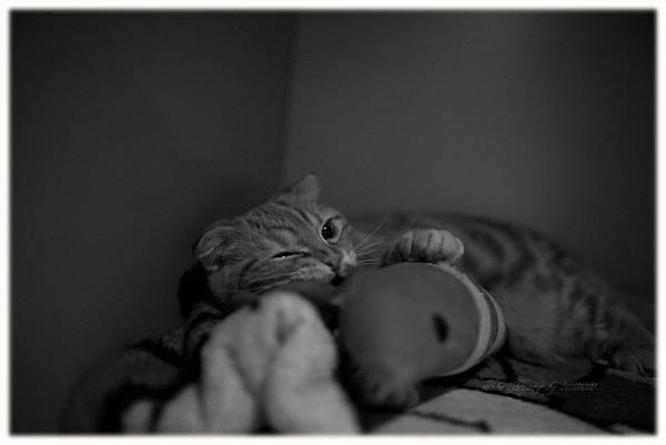 20111012 貓守城堡-辛巴與娜娜_10.jpg