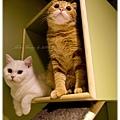 20111012 貓守城堡-辛巴與娜娜_23.jpg