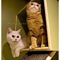 20111012 貓守城堡-辛巴與娜娜_22.jpg
