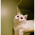 20111012 貓守城堡-辛巴與娜娜_25.jpg