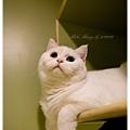 20111012 貓守城堡-辛巴與娜娜_24.jpg