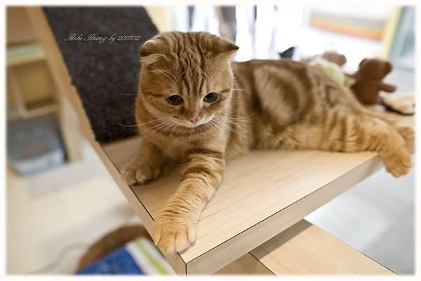 20111012 貓守城堡-辛巴與娜娜_30.jpg
