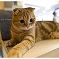 20111012 貓守城堡-辛巴與娜娜_31.jpg