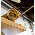 20111012 貓守城堡-辛巴與娜娜_37.jpg