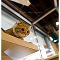 20111012 貓守城堡-辛巴與娜娜_36.jpg