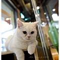 20111012 貓守城堡-辛巴與娜娜_38.jpg