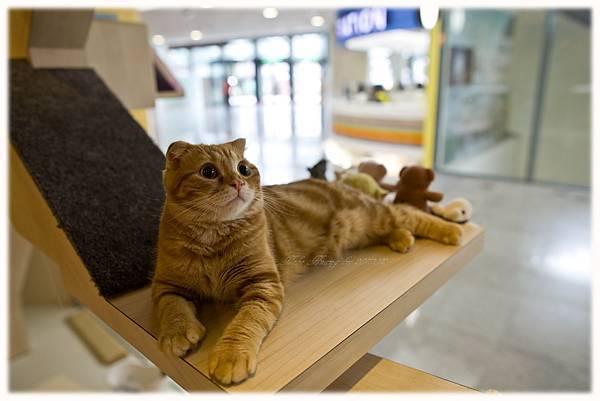 20111012 貓守城堡-辛巴與娜娜_41.jpg