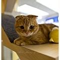 20111012 貓守城堡-辛巴與娜娜_44.jpg