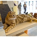 20111012 貓守城堡-辛巴與娜娜_43.jpg
