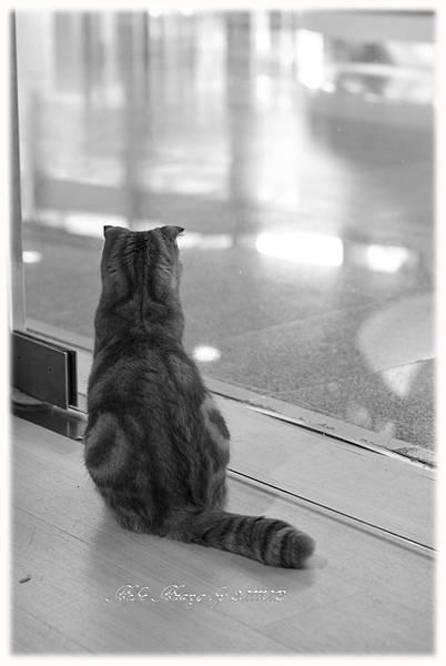 20111012 貓守城堡-辛巴與娜娜_47.jpg