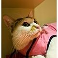 20111030貓守城堡變裝秀_10.jpg