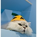 20111030貓守城堡變裝秀_67.jpg
