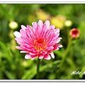 nEO_IMG_IMG_1359.jpg