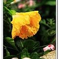 nEO_IMG_IMG_1222.jpg