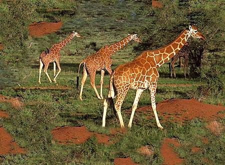 african_safari3