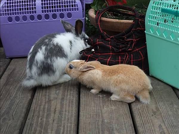 小小:栗子你想對我的屁股