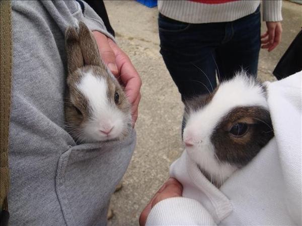 另一個跟我一樣待在拔比口袋的兔兔