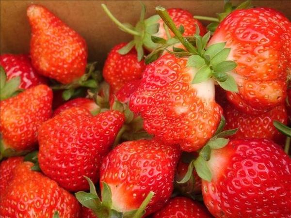 好鮮嫩的草莓