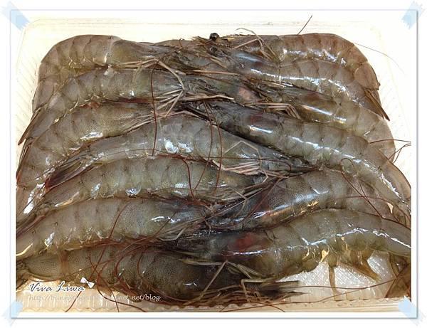 drshrimp37.JPG