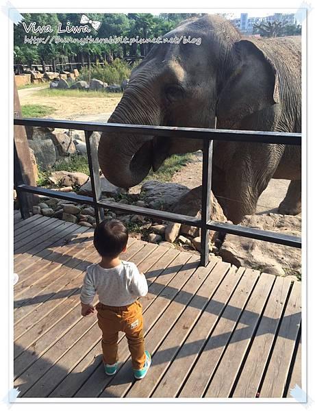 zoo20161108-1.jpg