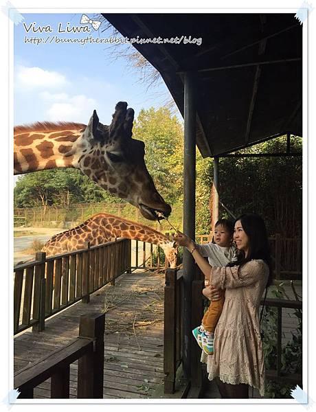 zoo20161108-9.jpg