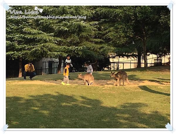 zoo20161108-11.jpg