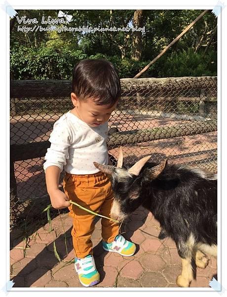 zoo20161108-12.jpg