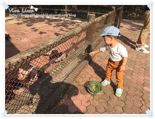 zoo20161108-14.jpg