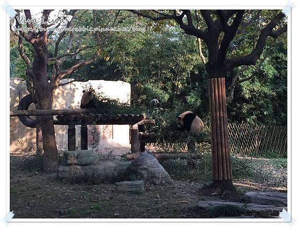 zoo20161108-24.jpg