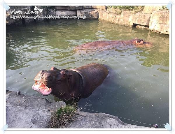 zoo20161108-28.jpg