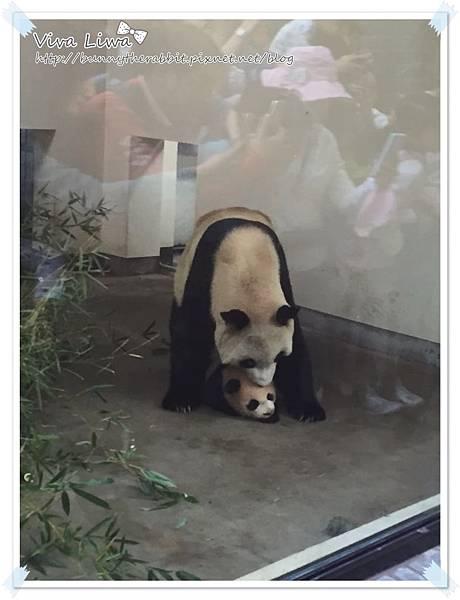 zoo20161108-31.jpg