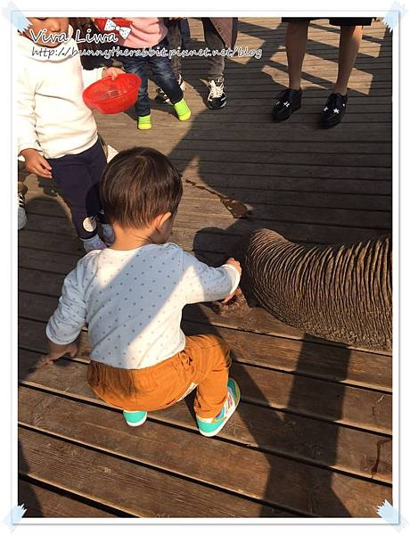 zoo20161108-36.jpg
