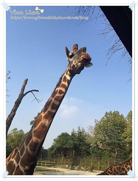 zoo20161108-38.jpg