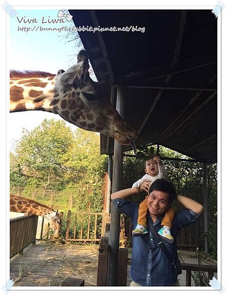 zoo20161108-40.jpg
