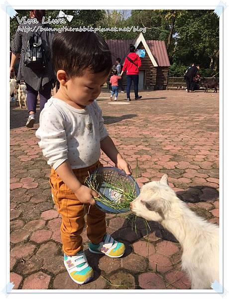 zoo20161108-37.jpg