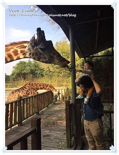 zoo20161108-45.jpg