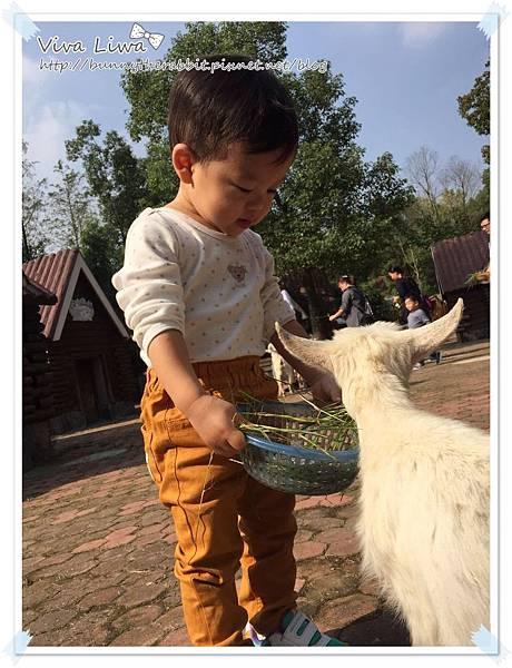 zoo20161108-48.jpg