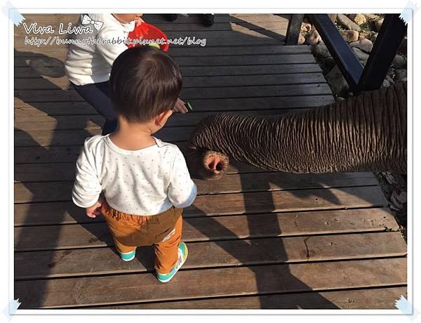 zoo20161108-46.jpg